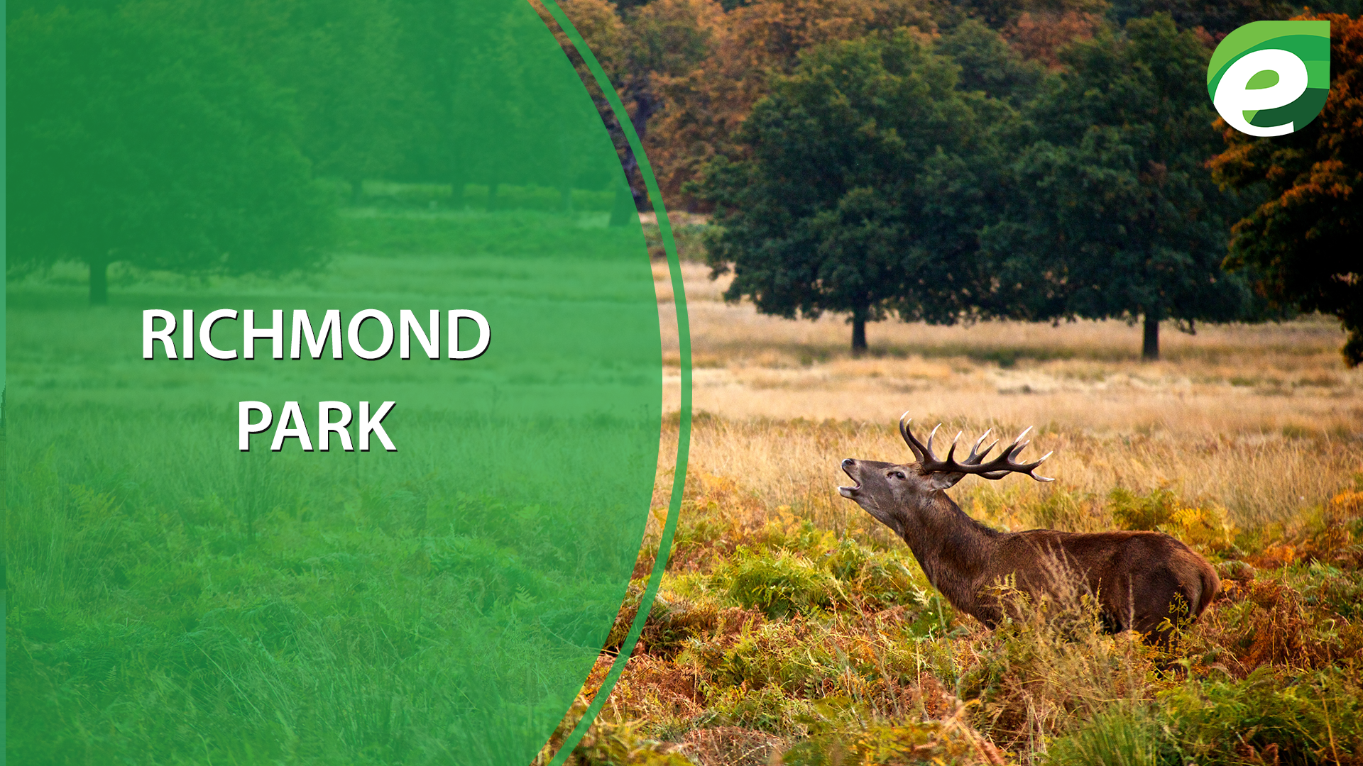 free things to do in London- Richmond Park