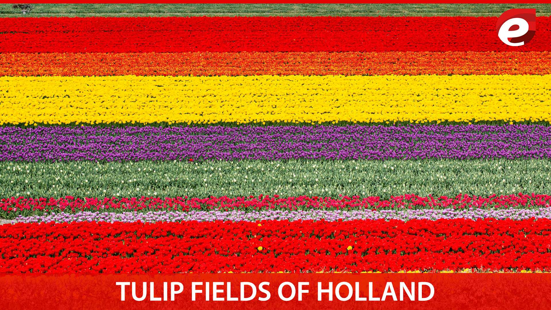 most colorful places on earth- Tulip fields